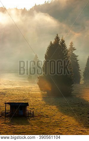 Trees In The Valley Of Mountainous Natural Park. Foggy Morning In Autumn Season. Beautiful Rolling L
