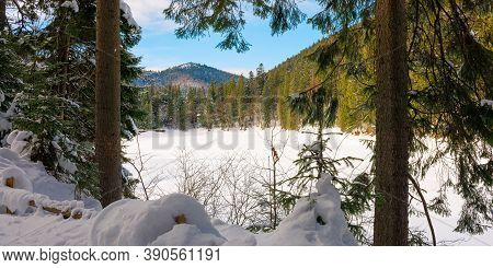 Snow Covered Mountain Lake Among The Forest. Green Spruce Trees On The Shore. Beautiful Sunny Weathe