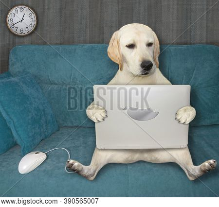 A Dog Is Sitting On A Blue Divan And Using A Laptop In The Living Room.