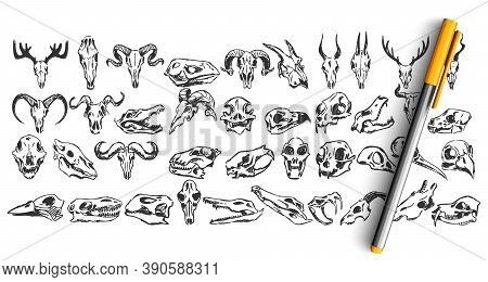 Skulls Doodle Set. Collection Of Hand Drawn Sketches Templates Patterns Of Dead Wild Animal Goat Dea