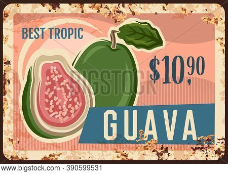 Guava Tropical Fruit Rusty Metal Signboard Of Vector Fresh Farm Food. Exotic Garden Ripe Guava Old T