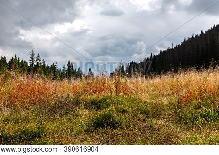 Tatra Mountains Autumn Landscape With Red Fireweed (chamaenerion Angustifolium) Flowers And Dry Gras