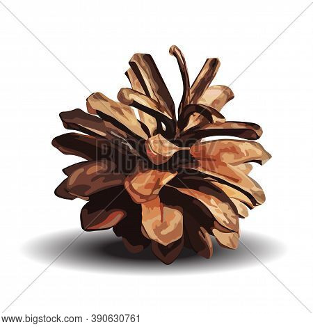 Brown Pine Cone. Vector Illustration Isolated On White