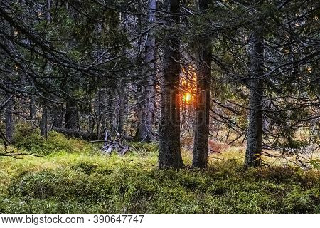 Sunrise Scene In Coniferous Forest, Mengusovska Valley, High Tatras Mountains, Slovak Republic. Hiki