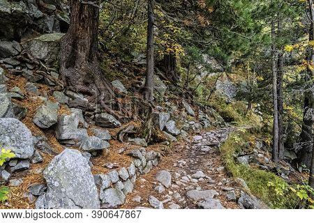 Autumn Scene In Coniferous Forest, Mengusovska Valley, High Tatras Mountains, Slovak Republic. Hikin