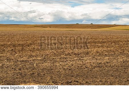 Agricultural Field. Cropped Wheat Ears On The Field After Harvest. A Field Of Golden Wheat And Blue