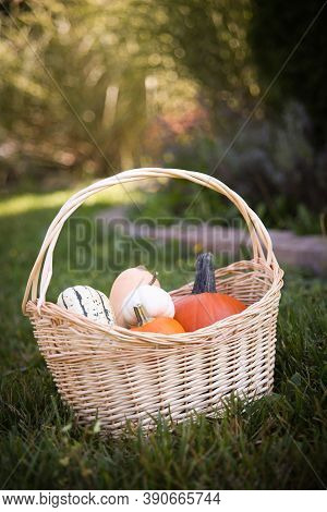 Basket Of Fall Squash, Gourds, And A Pumpkin Outdoors On A Beautiful Autumn Day.