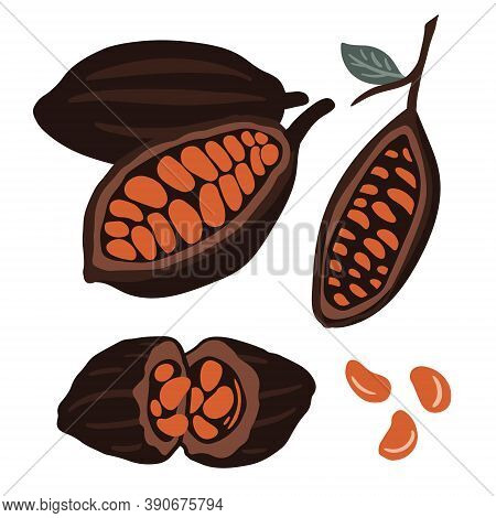 Fruits Of Cocoa Beans Set. Chocolate Beans.