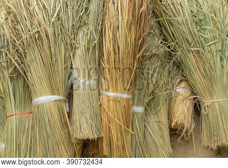 Bundle Of Asian Dry Ripe Rice On Rice Field. Sheaf Of Wheat Pattern Texture Background In Agricultur