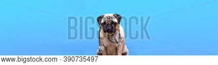Portrait Of A Cute Pug Dog As A Medicine Doctor With A Stetoscope. Copy Space. Banner. Place For Tex