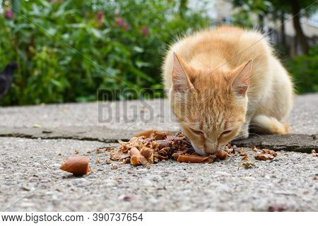 Homeless Cat Eating Food On Street, Hungry Lonely Animals Problem. Taking Care Of Street Cats. Peopl