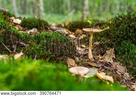 Beautiful Green Forest Glade Covered With Moss With Mushroom And Yellow Leaves. Space For Message.