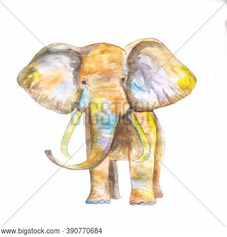 Portrait Of An Elephant. Elephant In Watercolor Technique