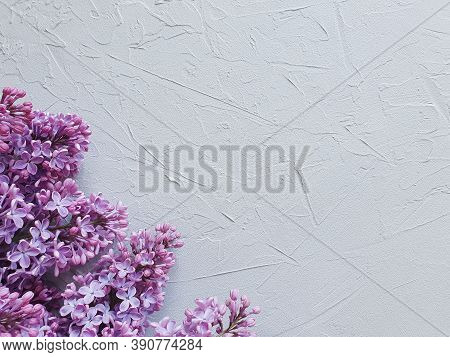 Pink Lilac Floral Border On A Gray Concrete Textured Background. Basis For A Spring Card / Invitatio