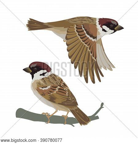 Realistic Sparrow Flying And Sitting On Branch. Vector Illustration Of Little Bird Sparrow In Hand D
