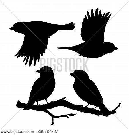 Set Of Realistic Sparrows Sitting And Flying. Monochrome Vector Illustration Of Black Silhouettes Of