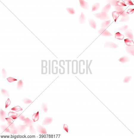 Pink Sakura Flower Flying Petals Isolated On White. Soft Floral Background. Japanese Sakura Petals S