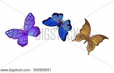 Fluttering Butterflies With Brightly Coloured Wings Vector Set