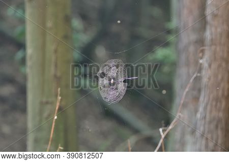 Close-up On A Woven Spider Web In The Woods