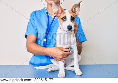 Young puppy at the veterinarian going to health checkup, professional examining dog using stethoscope