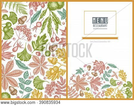 Menu Cover Design With Pastel Fern, Dog Rose, Rowan, Ginkgo, Maple, Oak, Horse Chestnut, Chestnut Ha