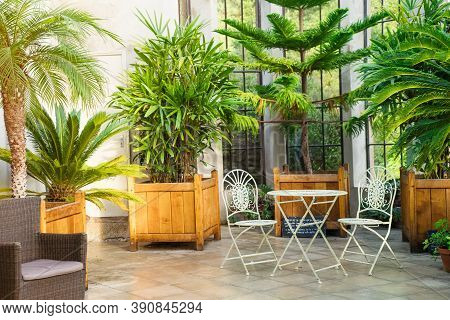 Metal Garden Furniture, Stools And Table Standing In Tropical Plants Orangery With Palms In Wooden F