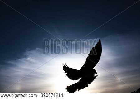 Close-up Photo Of A Black Silhouette Of A Bird Flying At Dusk Against Deep Blue Sky With An Optical