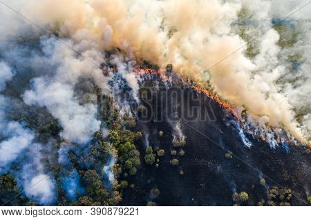 Forest Fire Aerial View, Wildfire After Dry Summer Season, Burning Nature.