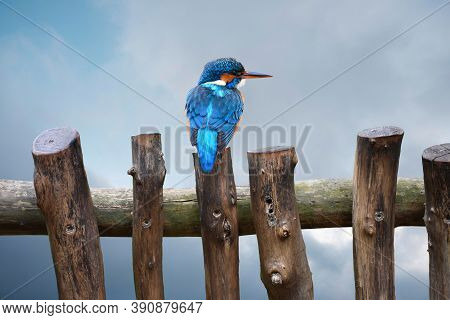 A Common Eurasian Kingfisher, Alcedo Atthis Bengalensis, Perches On A Small Fence