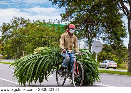 El Cerrito, Colombia - October, 2020:  Man Carrying Green Fodder On His Bicycle On The Road To El Ce