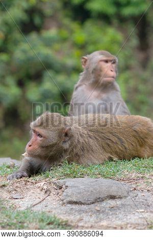 14 April 2007 Monkey At The Kam Shan Country Park , Hong Kong