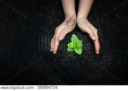 Hand Watering Plants Tree Mountain Green Background Female Hand Holding Tree On Nature Field Grass F