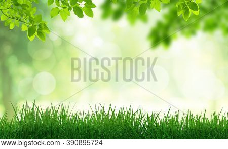 Green Natural View Of Green Leaves In Park With Blurry Image Green Trees And Sunlight Bokeh In The M