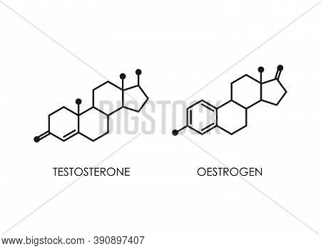 Testosterone And Oestrogen Molecula Structure. Colorful Line Icon Isolated On White Background.