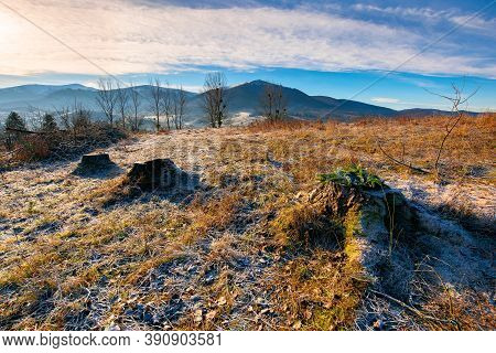 Deforestation In The Mountains. Stump Of Fresh Cut Trees In Hoarfrost. Cold Autumn Morning Countrysi