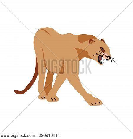 Jaguar Puma Lion Panther. Vector Illustration. Animal Isolated