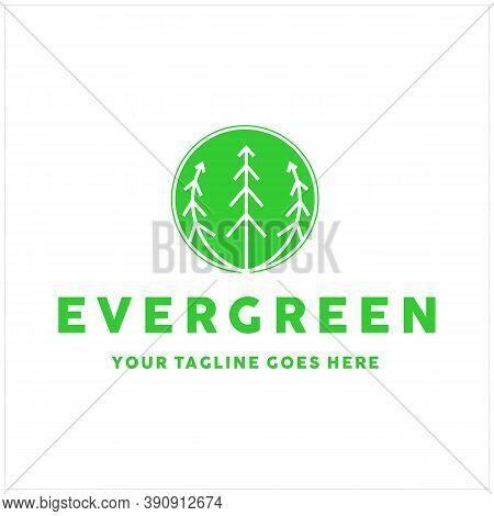Pine Evergreen Fir Hemlock Spruce Conifer , Cedar, Coniferous, Cypress, Larch, Pinus Trees Forest Is