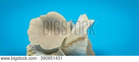 fresh royal oyster mushrooms for cooking vegetarian foods with a large amount of protein