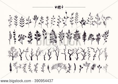 Tree Branches, Herbs, Plants Silhouettes Made With Ink. Hand Drawn Clipart Illustration Collection O