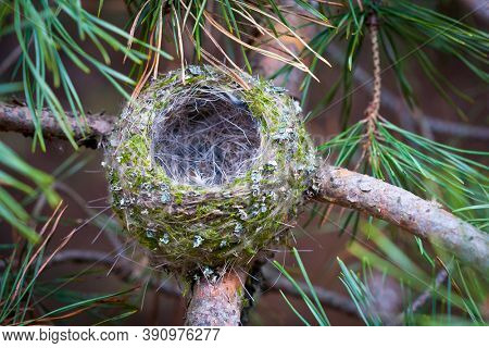 empty bird nest on tree branch
