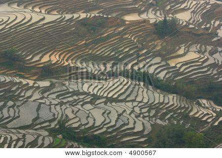 Rice Terraced Fields In Yuan Yang, China