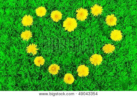 Heart of dandelions on grass close-up