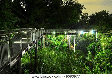 Elevated lit walkway with forested background