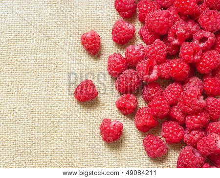 Many Red Ripe Raspberry Fruit