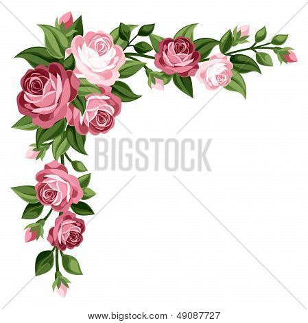 Pink vintage roses, rosebuds and leaves. Vector illustration.