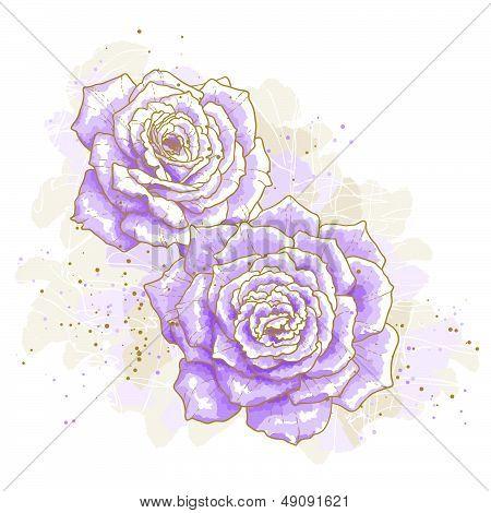Violet roses on white background