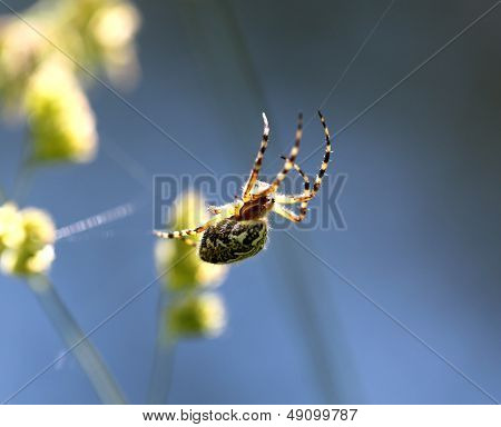 Spider Is Sitting On A Spider Web Against The Sky
