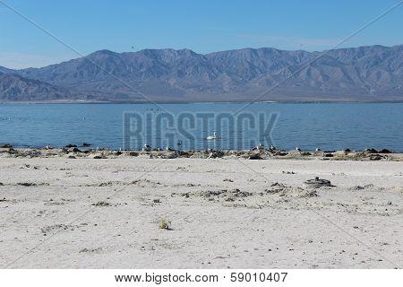 Salton Sea California Landscape