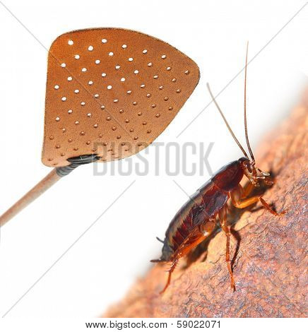 Flyswatter and cockroach. Ecological pest control.