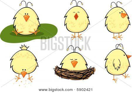 Baby Chick Set
